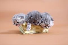 śliczny dziecko kot Fotografia Stock
