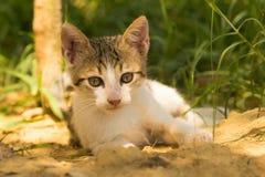 Śliczny dziecko kota portret przeciw pięknemu tłu Fotografia Royalty Free