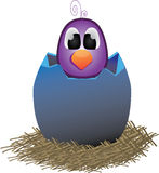 Śliczny fiołkowy ptak w jajecznej skorupie Obrazy Stock