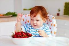 Śliczny imbirowy chłopiec obsiadanie w highchair i degustaci dojrzałych wiśniach Zdjęcie Royalty Free