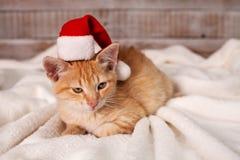 Śliczny imbirowy kot dostaje w boże narodzenie nastroju - być ubranym Santa obrazy stock