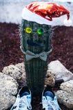 Śliczny kaktus ubierał jak mężczyzna w Santa kapeluszu Obraz Royalty Free