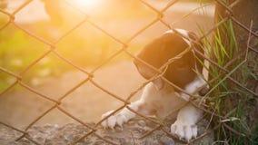 Śliczny klatkowy szczeniaka czekanie dla adopci zdjęcie wideo