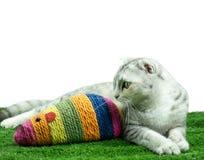 Śliczny kot bawić się z myszy kolorową zabawką Fotografia Royalty Free
