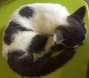 Śliczny kot bierze drzemkę zdjęcia stock