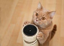 Śliczny kot cykliną obraz royalty free