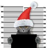 Śliczny kot jako Santa Claus w więzieniu Na biel obrazy stock