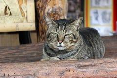 Śliczny kot kłaść na ziemi Zdjęcie Stock