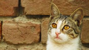 Śliczny kot patrzeje ptaki zdjęcia stock