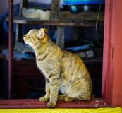 Śliczny kot relaksuje przy wiejskim domem obraz stock
