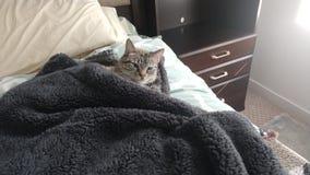 Śliczny kot w łóżku pod powszechnym dosypianiem fotografia stock