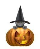 Śliczny kot w kostiumu z halloweens dyniowymi royalty ilustracja