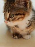 Śliczny kot, wysoka rozdzielczość, zwierzęta Zdjęcie Stock