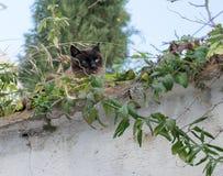 Śliczny kot z jego jęzorem out Obraz Royalty Free