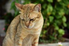 Śliczny kot Zostaje w domu obraz royalty free