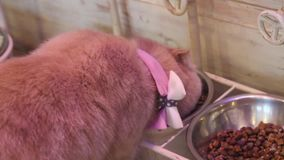 śliczny kota łasowanie zbiory