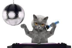 Śliczny kota śpiew z mikrofonem karaoke piosenka w noc klubie -- odizolowywający na bielu obrazy stock