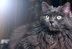 śliczny kota światło Fotografia Royalty Free