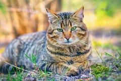 Śliczny kota relaksować plenerowy Zdjęcie Royalty Free