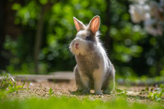Śliczny królik Outdoors Obraz Royalty Free