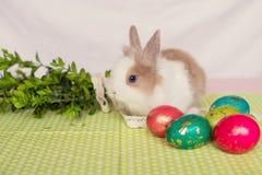Śliczny królik z Wielkanocnymi jajkami na zielonym tle 2 forsują pisklęca pojęcia Easter jajek kwiatów trawa malujących umieszcza obrazy stock