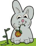 śliczny królika łasowanie Zdjęcia Stock
