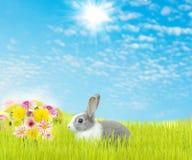 Śliczny królika i piękno kwiatu wiosny sezon Obraz Stock
