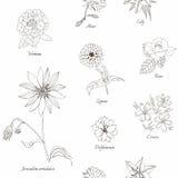 śliczny kwiecisty deseniowy bezszwowy Ręka rysujący czarny i biały kwiaty Fotografia Stock