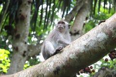 Śliczny lisiątko małpa na drzewie Fotografia Royalty Free
