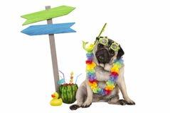 Śliczny mądrze mopsa szczeniaka psa siedzący puszek z arbuza koktajlem, jest ubranym hawajczyka kwiatu girlandę, gogle i snorkel, Zdjęcia Stock