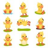 Śliczny mały żółty kaczątko charakter - ustawia, pisklęca kaczka w różnych pozach i sytuacj wektorowe ilustracje na bielu ilustracji