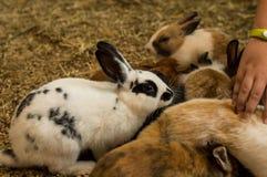 Śliczny mały biały i czarny królik zdjęcie royalty free