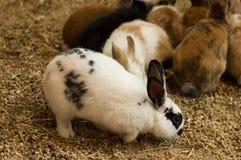 Śliczny mały biały i czarny królik obrazy royalty free