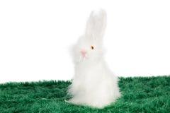 Śliczny mały biały królik na zielonej trawie Obraz Royalty Free