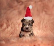 Śliczny mały grinch szczeniak jest ubranym Santa kapelusz fotografia royalty free