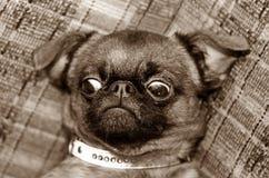 Śmieszny pies Obraz Stock