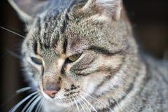 Śliczny mały kot pozuje dla fotografii zdjęcie stock