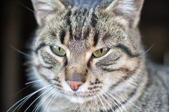 Śliczny mały kot pozuje dla fotografii obraz stock