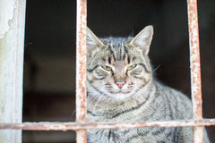Śliczny mały kot pozuje dla fotografii obrazy stock