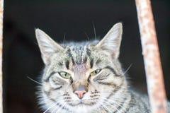 Śliczny mały kot pozuje dla fotografii obrazy royalty free
