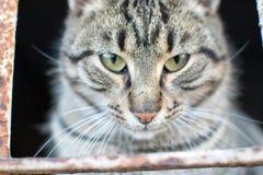 Śliczny mały kot pozuje dla fotografii zdjęcie royalty free