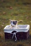 Śliczny mały kot w łozinowym koszu na zielonej trawie fotografia stock