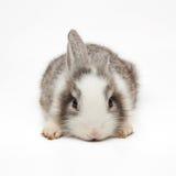 Śliczny mały królik obrazy stock