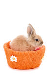 Śliczny mały królika królik na białym tle Obrazy Royalty Free