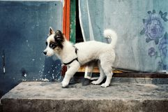 Śliczny mały psi czekanie na zewnątrz ich zdjęcia stock