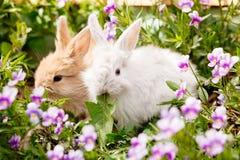 Śliczny Mały Wielkanocny królik Zdjęcie Royalty Free