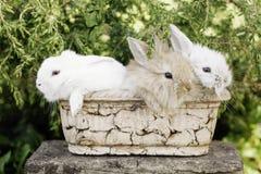 Śliczny Mały Wielkanocny królik Fotografia Stock