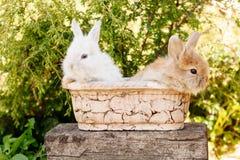 Śliczny Mały Wielkanocny królik Obraz Royalty Free