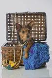 Śliczny mieszany trakenu Terrier szczeniak fotografia stock