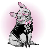 Śliczny moda modnisia buldog ilustracji